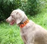 """Hunter's Little Helper"" Hunde Signalband"