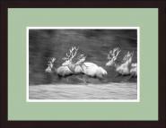 """""""Hirsche auf der Flucht"""" Wild-Fotografie"""