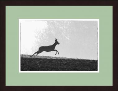 """""""Rehbock auf der Flucht"""" Wild-Fotografie"""