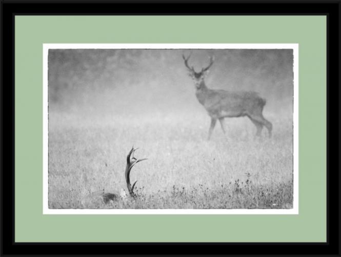 """""""Geforkelt"""" Wild-Fotografie"""